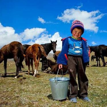 feeding horses.jpg