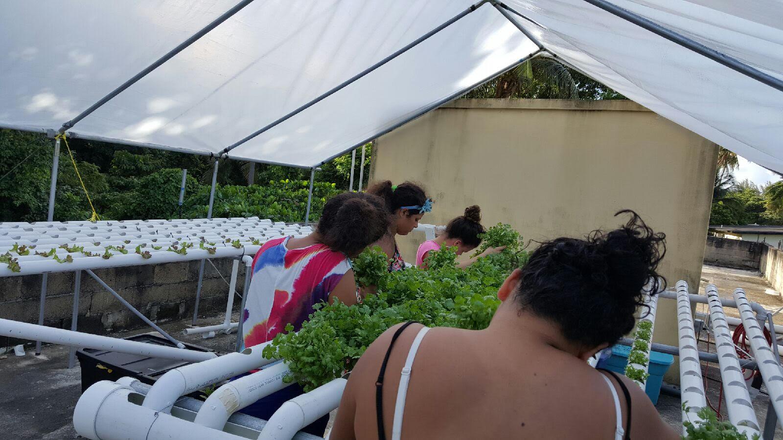 Dorado-Puerto-Rico-plants-1