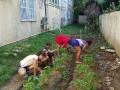 Dorado-Puerto-Rico-plants-2